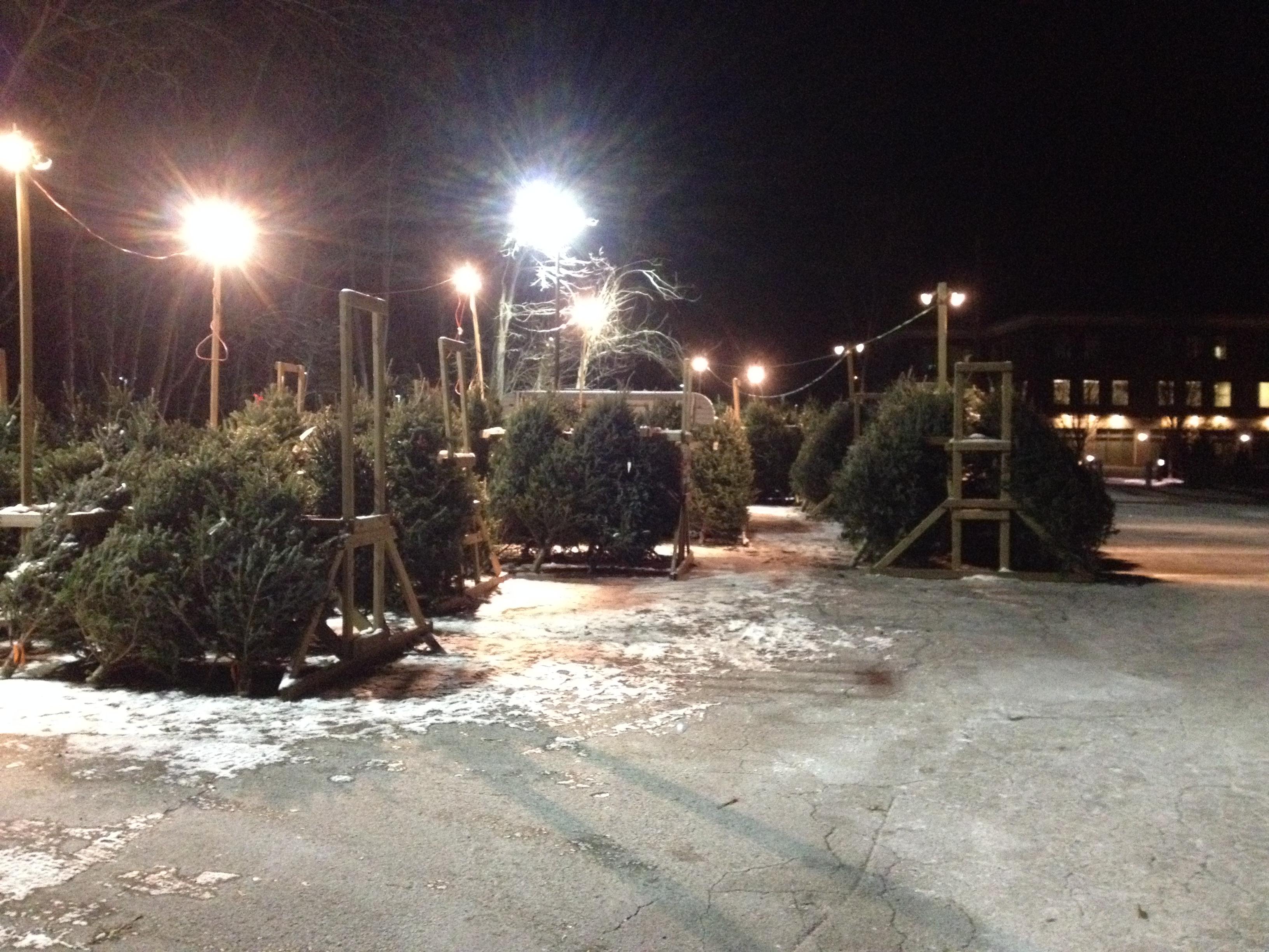 Tree Sale 2013