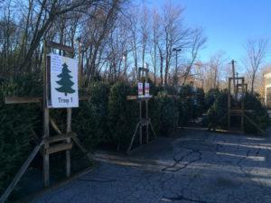 Tree Sales Image