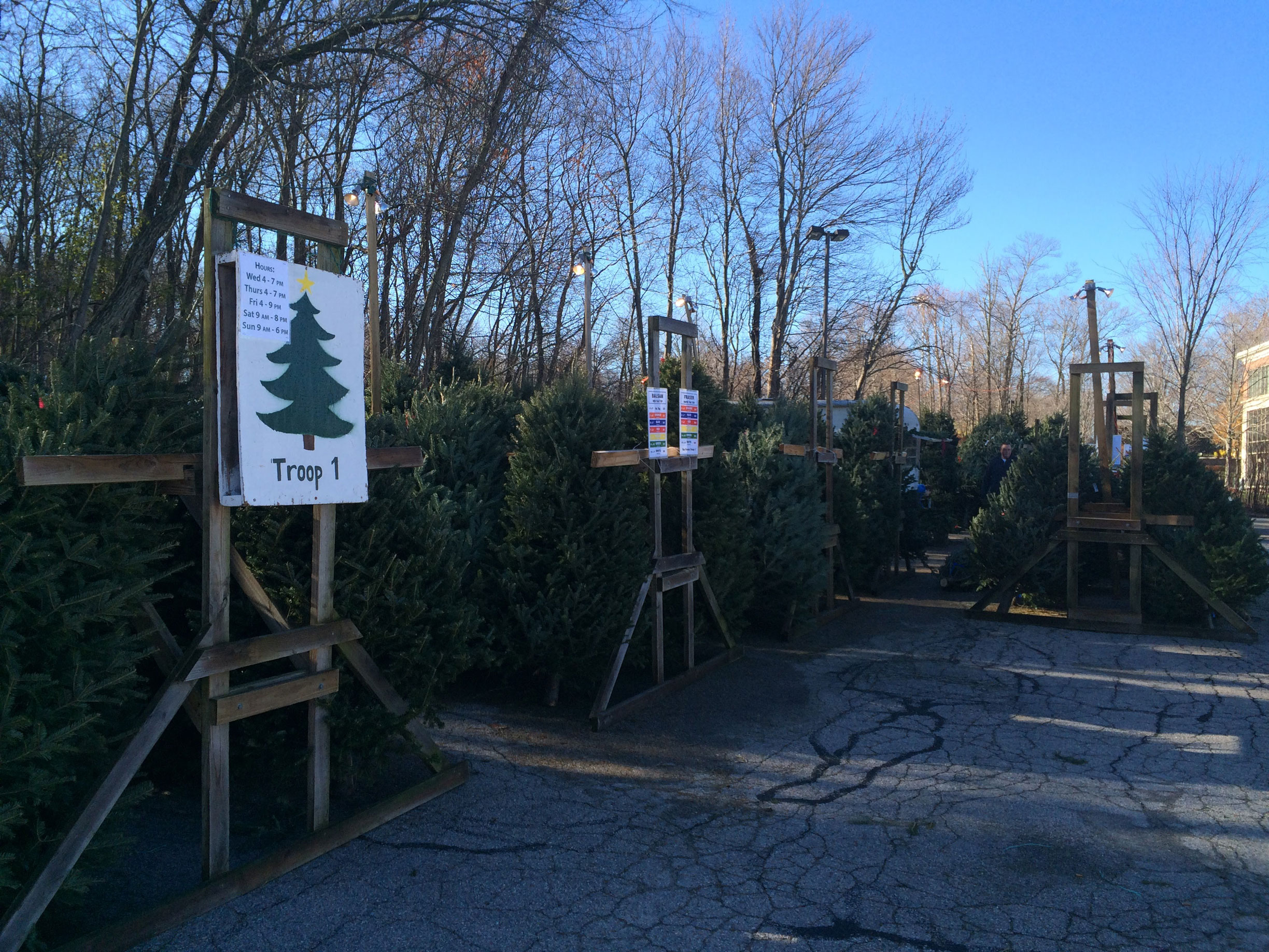 Tree Sales Image